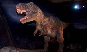 Tyrannosaurus-rex-at-the--001